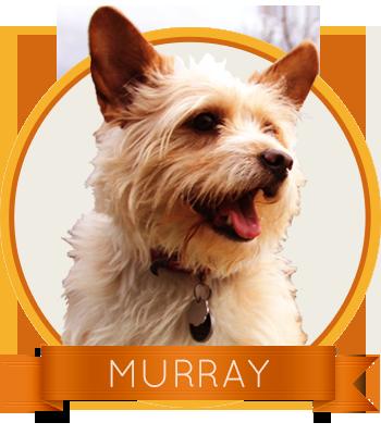 Murray-circle